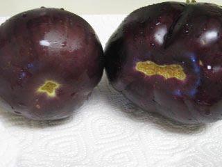 male-female-eggplant